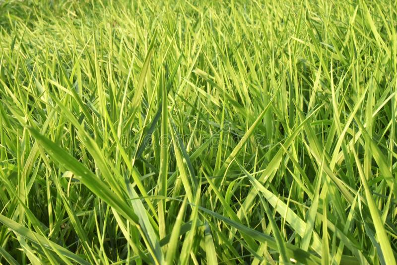 Green grass. Abstract, purity. stock photos
