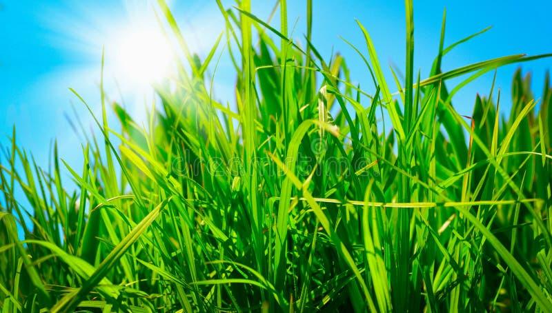 Green Grass Against A Blue Sunny Sky Stock Photos