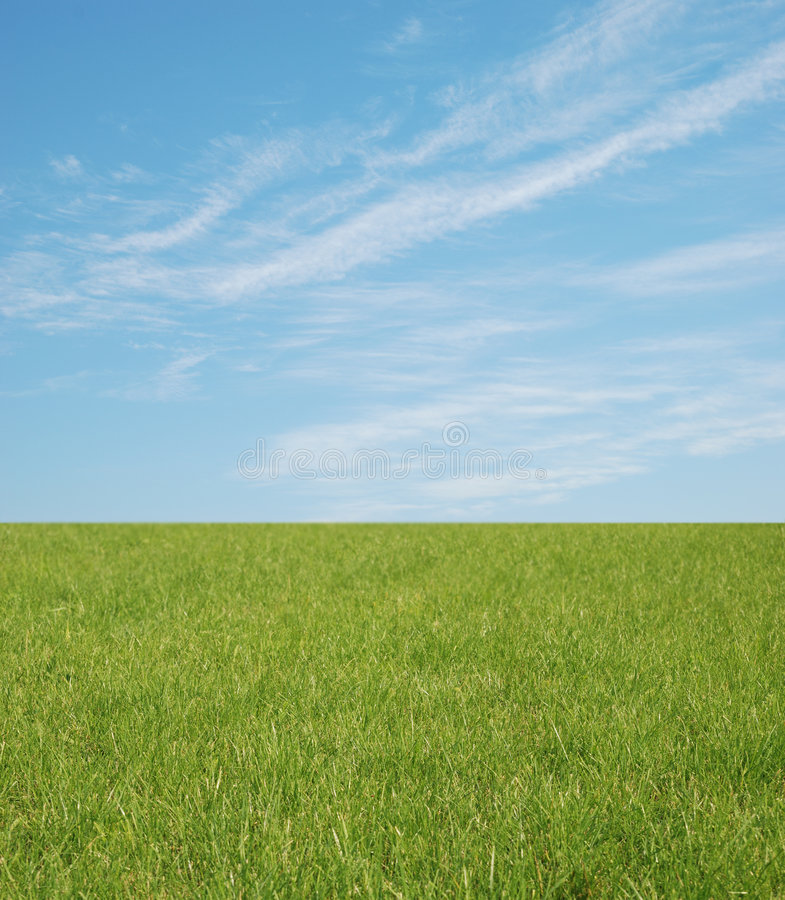 Free Green Grass And Blue Sky Royalty Free Stock Images - 3239749