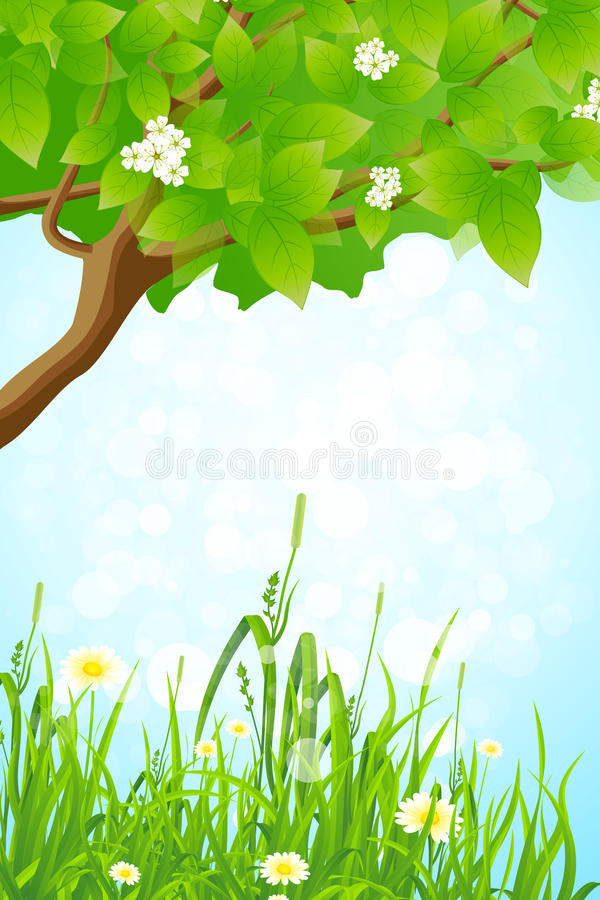 Free Green Grass And Tree Branch Stock Photography - 25598032