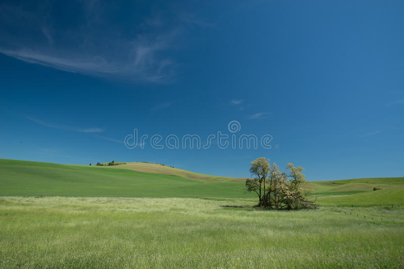 Green grass and the Wheat field royalty free stock photo
