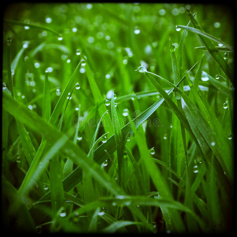 Green grass artistic background stock photography