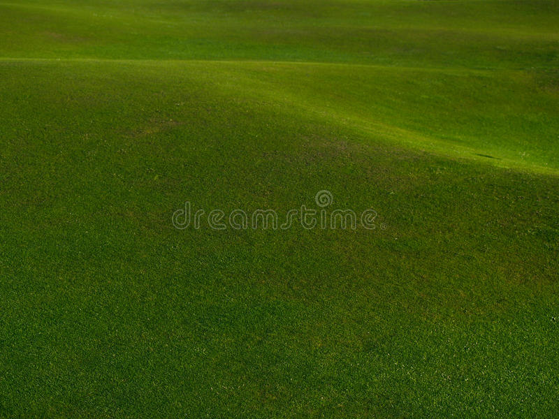 Download Green Grass background. stock photo. Image of background - 10999374