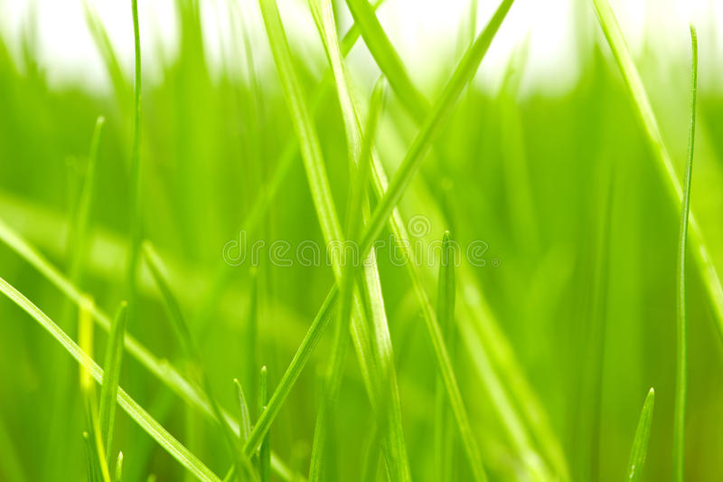 Download Green Grass Background Royalty Free Stock Photo - Image: 18475275
