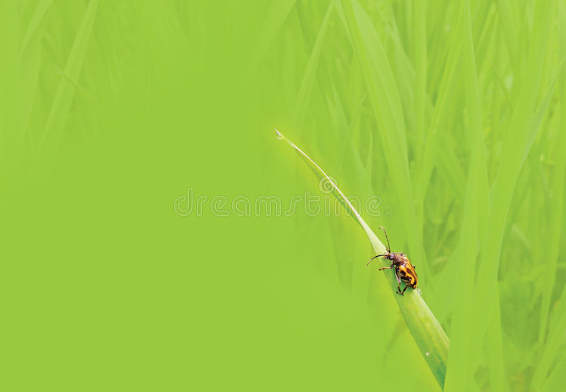 Download Green grass background stock image. Image of summer, beetle - 25644343