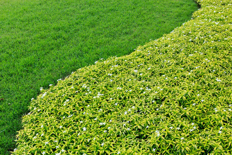 Download Green grass background stock photo. Image of blur, environment - 25683714