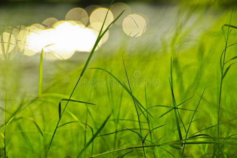 Green grass background. Fresh green grass in public park beside a river stock photo