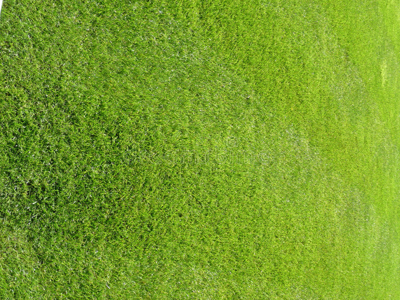 Download Green Grass Background 4 stock photo. Image of surface - 6163032
