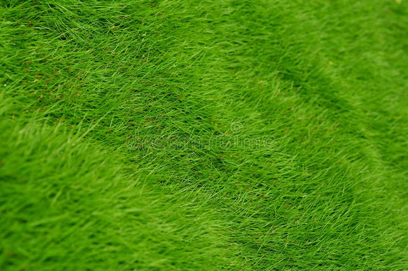 Download Green Grass Royalty Free Stock Photos - Image: 31302398