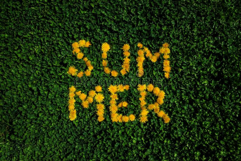 Green grass background with dandelions. Summer lettering. Lettering made of dandelions on green grass background. Word Summen on a lawn royalty free stock photo