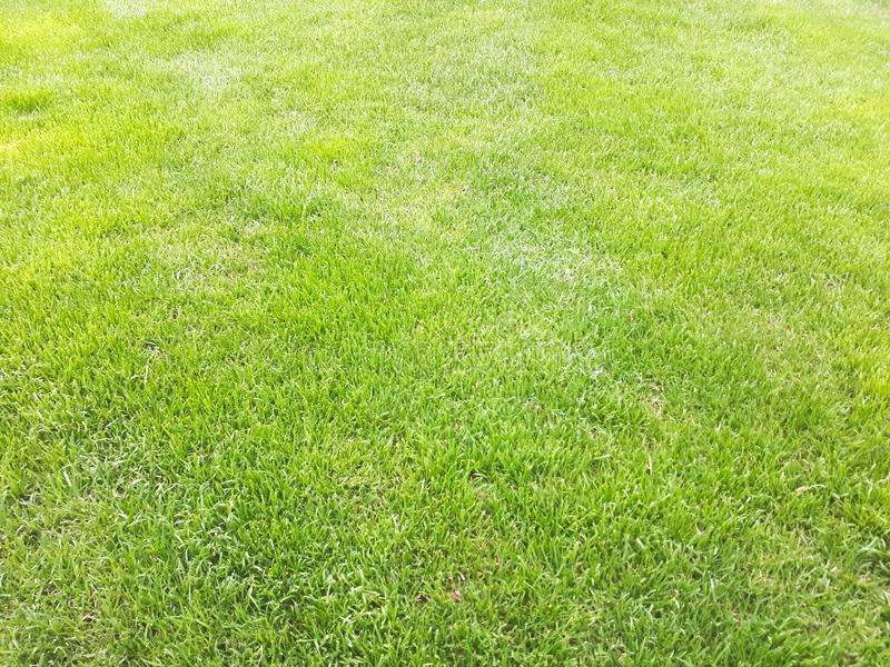 Green grass background. Fresh green grass background in spring royalty free stock image