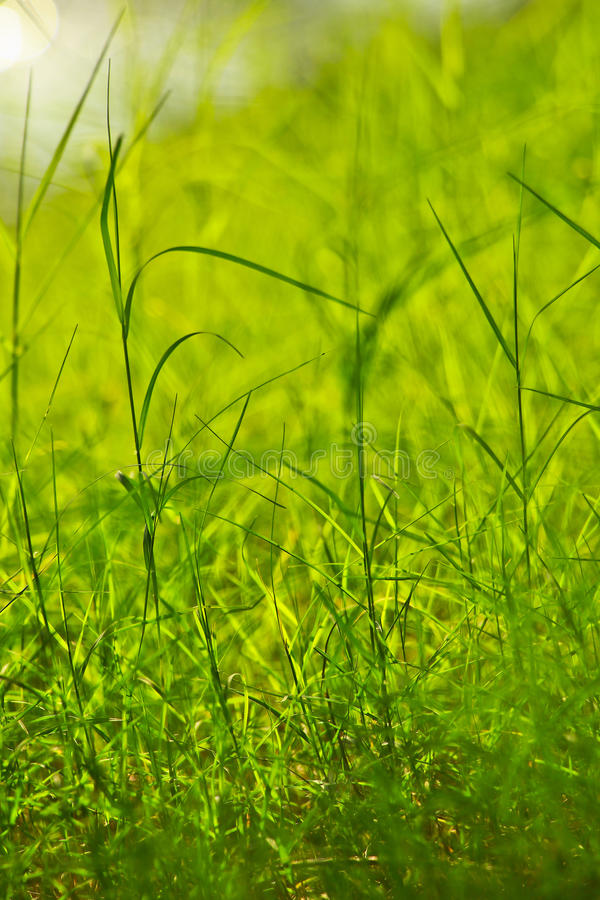 Green grass background. Fresh green grass in public park beside a river royalty free stock image