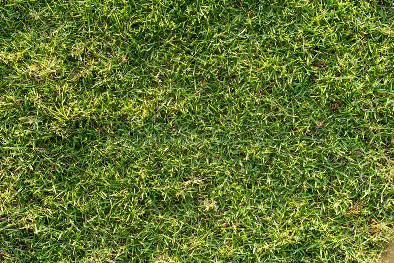 Green grass background. Good use for graphic and web designer stock images