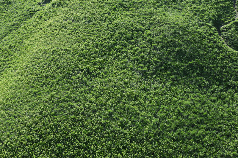 Green grass background. Hill covered with fresh grass in daylight royalty free stock photos