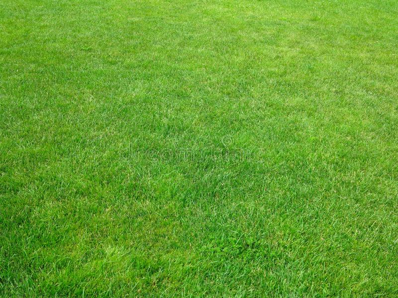 Green grass background lawn pattern textured background stock images