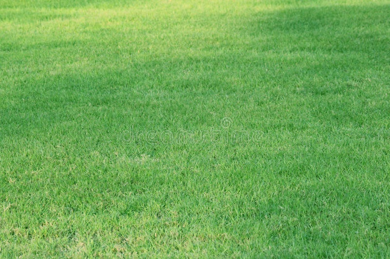 Green Grass background - 1 SEPTEMBER 2017. royalty free stock images