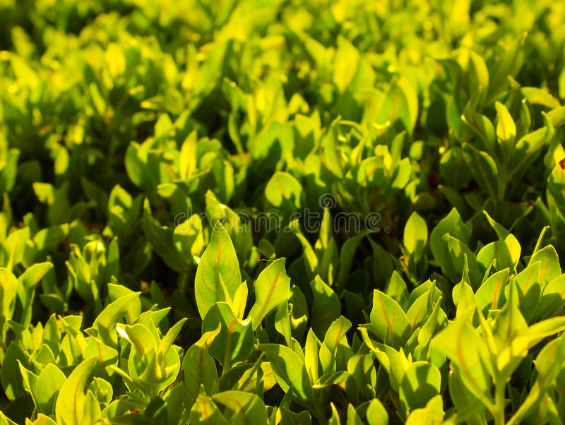 Download Green grass stock image. Image of colorful, lawn, nature - 33198875