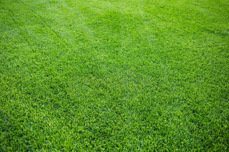 Green grass background texture. fresh bright juicy mowed lawn. top view royalty free stock photo