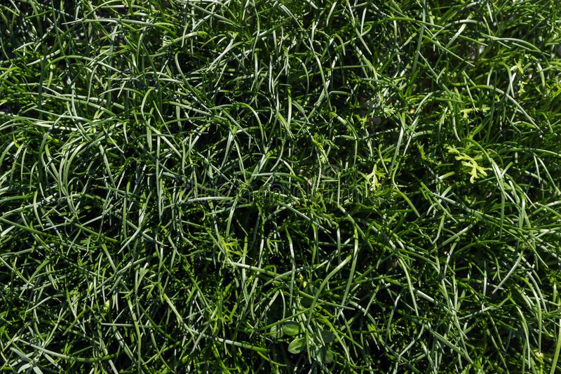 Green grass background texture. Natural background texture. Sunny day stock photos
