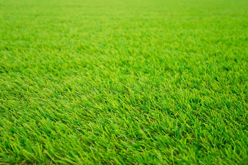 Green grass background texture pattern. Green grass background. green grass texture pattern royalty free stock image