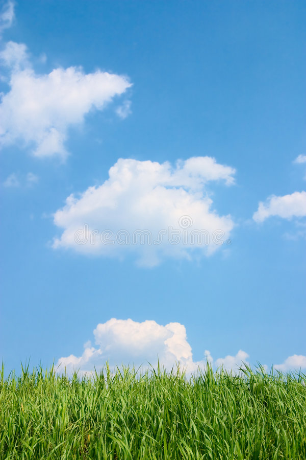 Green grass and beautiful blue cloudy sky. royalty free stock photo
