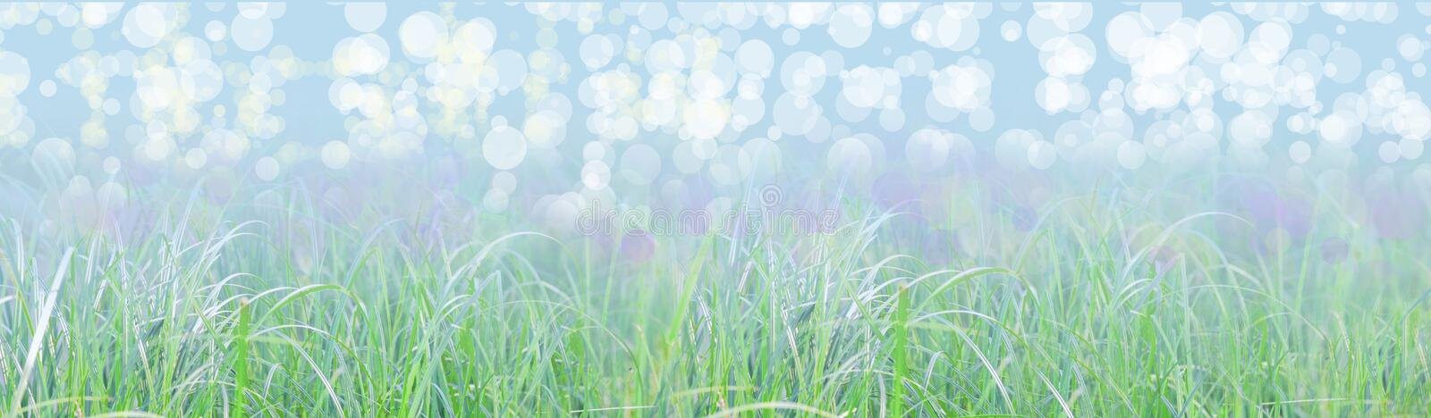 Green grass behind which the blue water of the lake. Clear summer day. Sun glare on clear water stock image