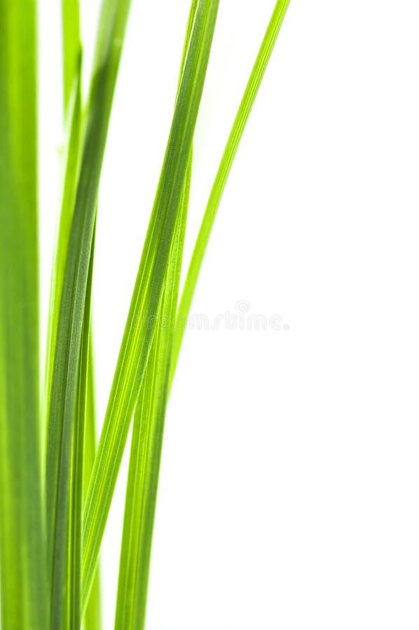 Free Green Grass Blades Stock Photo - 6614590