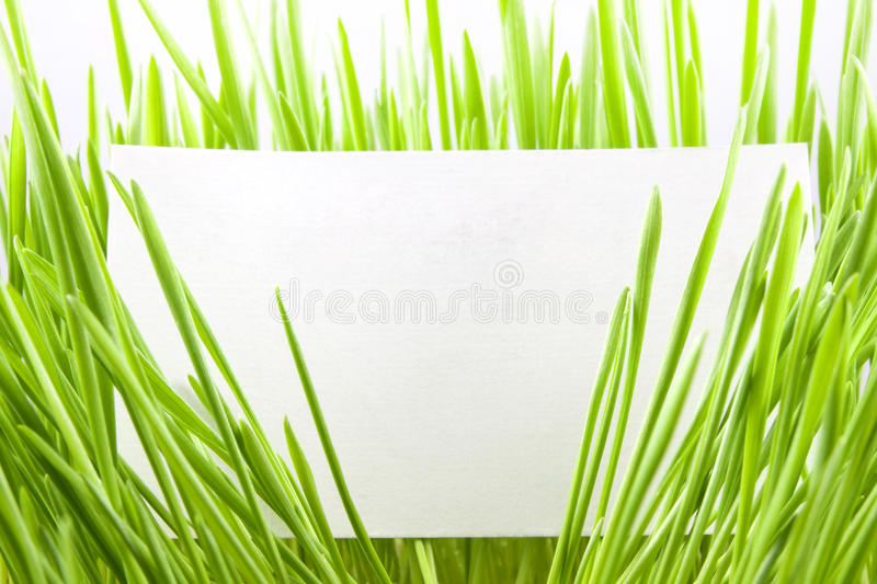 Green grass with blank business card. Green grass isolated on the white background blank business card stock photography