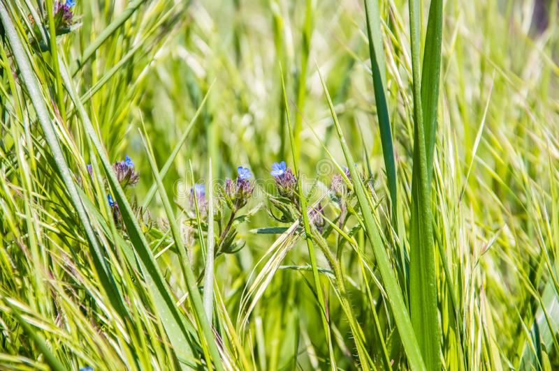 green grass and  blue flowers stock images