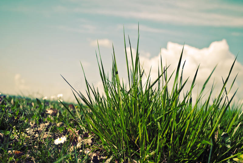 Green Grass And The Blue Sky Royalty Free Stock Photos