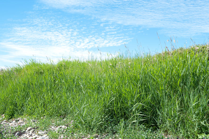 Download Green grass and blue sky stock photo. Image of outdoor - 14850662
