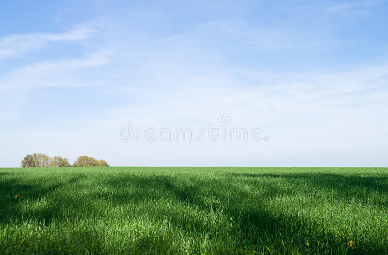 Green grass and blue sky. Green field and blue sky with trees on the horizon stock photography