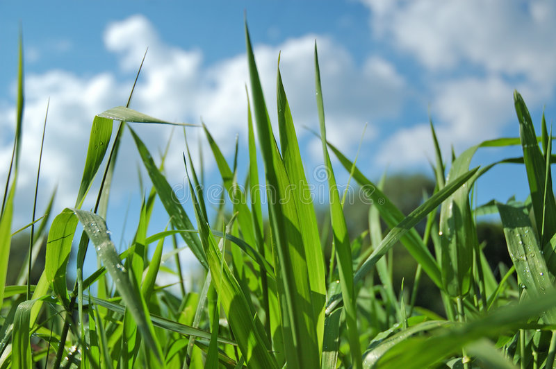 Green grass on blue sky. Nature background royalty free stock photography