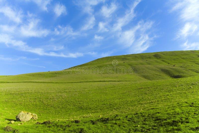Green Grass Blue Sky royalty free stock photos