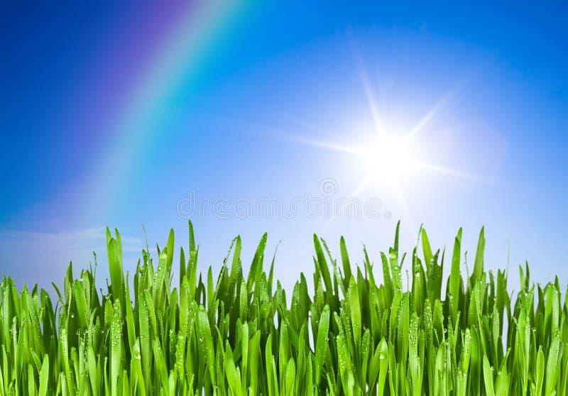 Green grass and blue sky stock photos