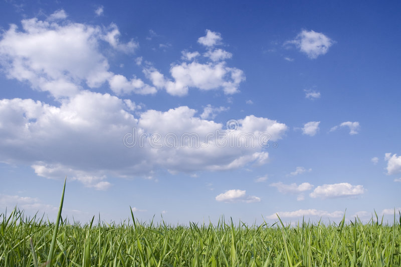 Green grass and blue sky. Green grass, blue sky and clouds royalty free stock photo