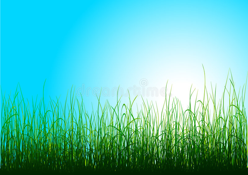 Download Green grass and blue sky stock vector. Illustration of painted - 6157849
