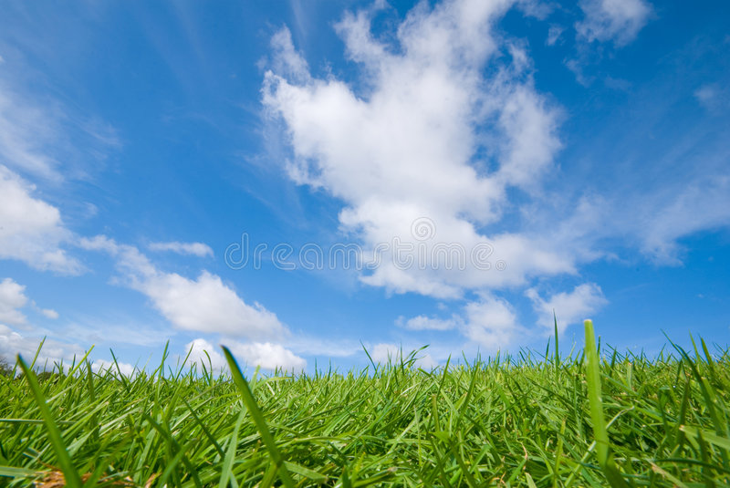 Green grass, blue sky royalty free stock photography