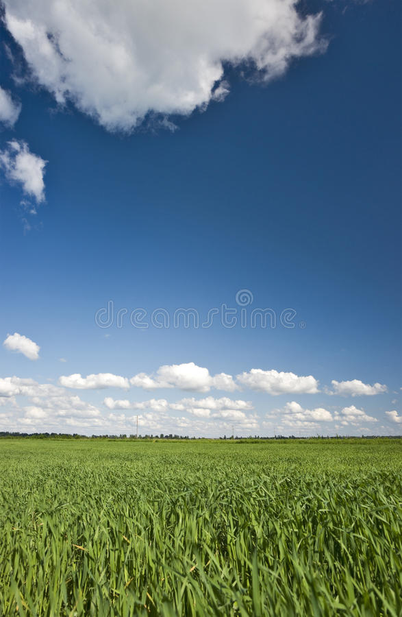 Download Green Grass And Blue Sky Background Royalty Free Stock Photos - Image: 9886908
