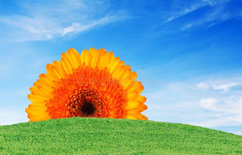 Green grass blue sky and flower. Green grass with blue sky and flower royalty free stock image