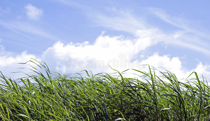 Download Green Grass and Blue Sky stock photo. Image of front - 30955684