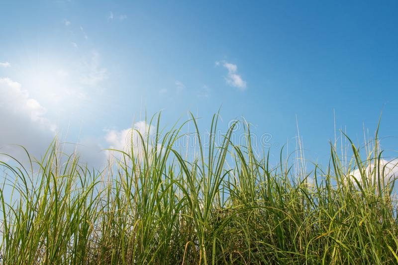 Green grass with blue sky. sunny spring background. stock images