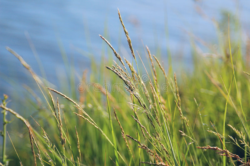 Green Grass and Blue Water stock photo