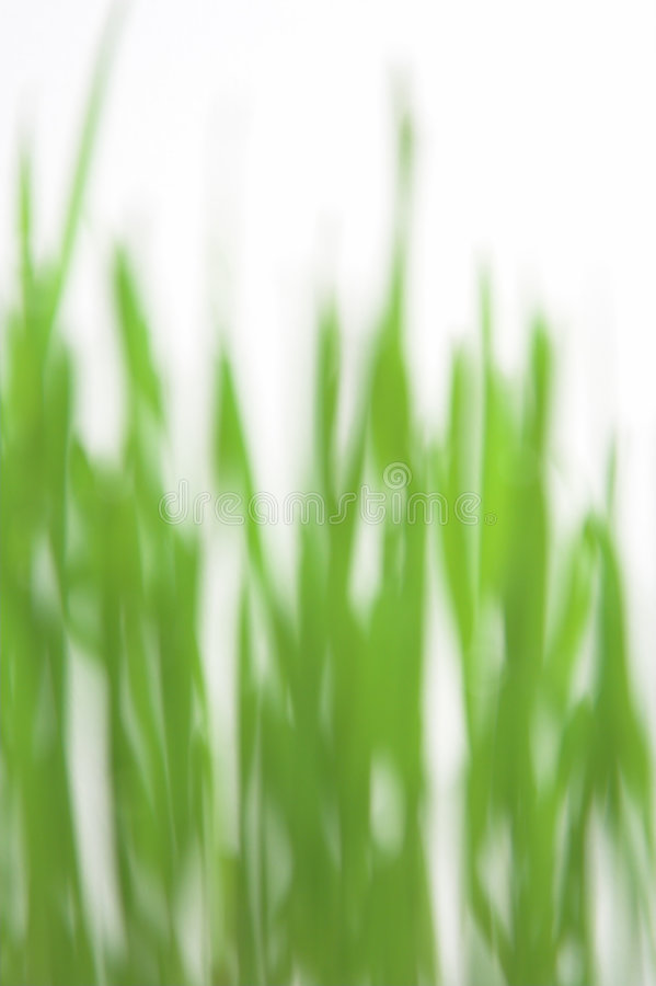 Download Green grass blured stock photo. Image of grow, botanist - 1423562