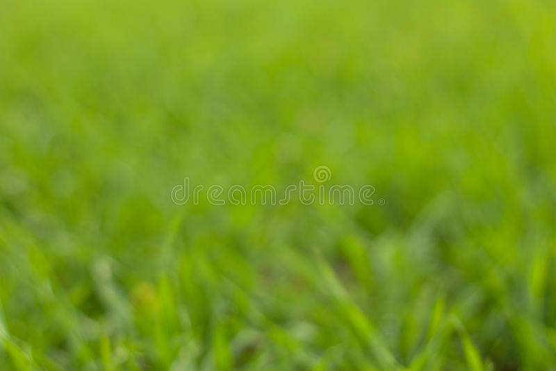 Download Green grass bokeh stock image. Image of abstract, sunny - 23099257