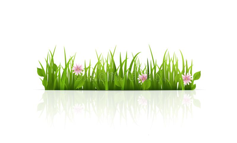 Green Grass Border. Isolated. Vector Illustration. stock photo