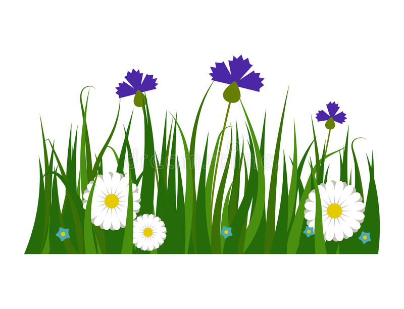 Green grass border plant lawn nature meadow ecology summer gardening vector illustration. Environment turf herb lush natural foliage growth royalty free illustration