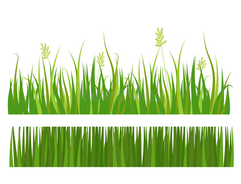 Green grass border plant lawn nature meadow ecology summer gardening vector illustration. Environment turf herb lush natural foliage growth vector illustration