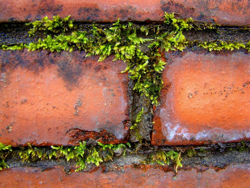 Contrast of green plants and red bricks. stock image