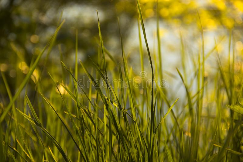 Green grass in the bright sun royalty free stock photos